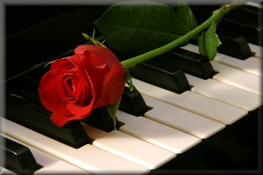 Piano_and_rose